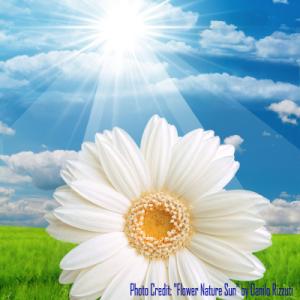 weatherflowerspost